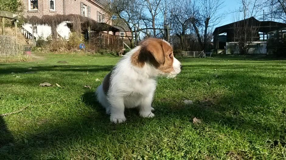 kleiner Mann in großem Garten - da gibt es viel Neues zu entdecken!