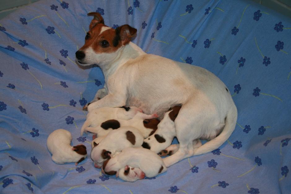Die stolze Mama mit ihren sieben Welpen!